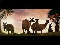 澳大利亚旅游宣传片