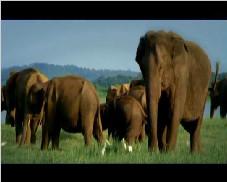 斯里兰卡旅游宣传片