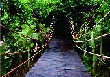 海南呀诺达雨林景区介绍_景点介绍