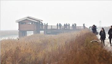 首届中国天津滨海国际观鸟文化节观鸟团走进新区北大港湿