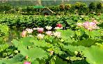 华南植物园旅游景点,华南植物园景点介绍,华南植物园景点