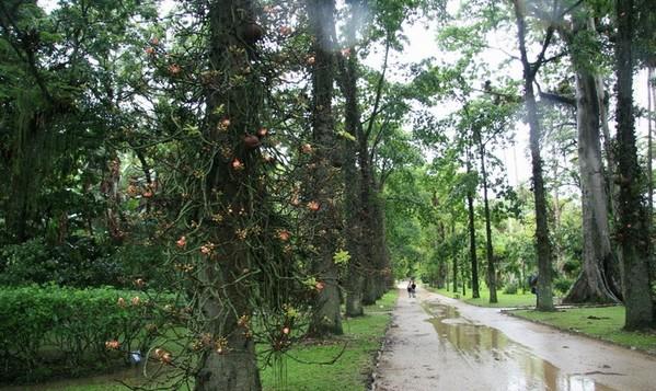 里约植物园2
