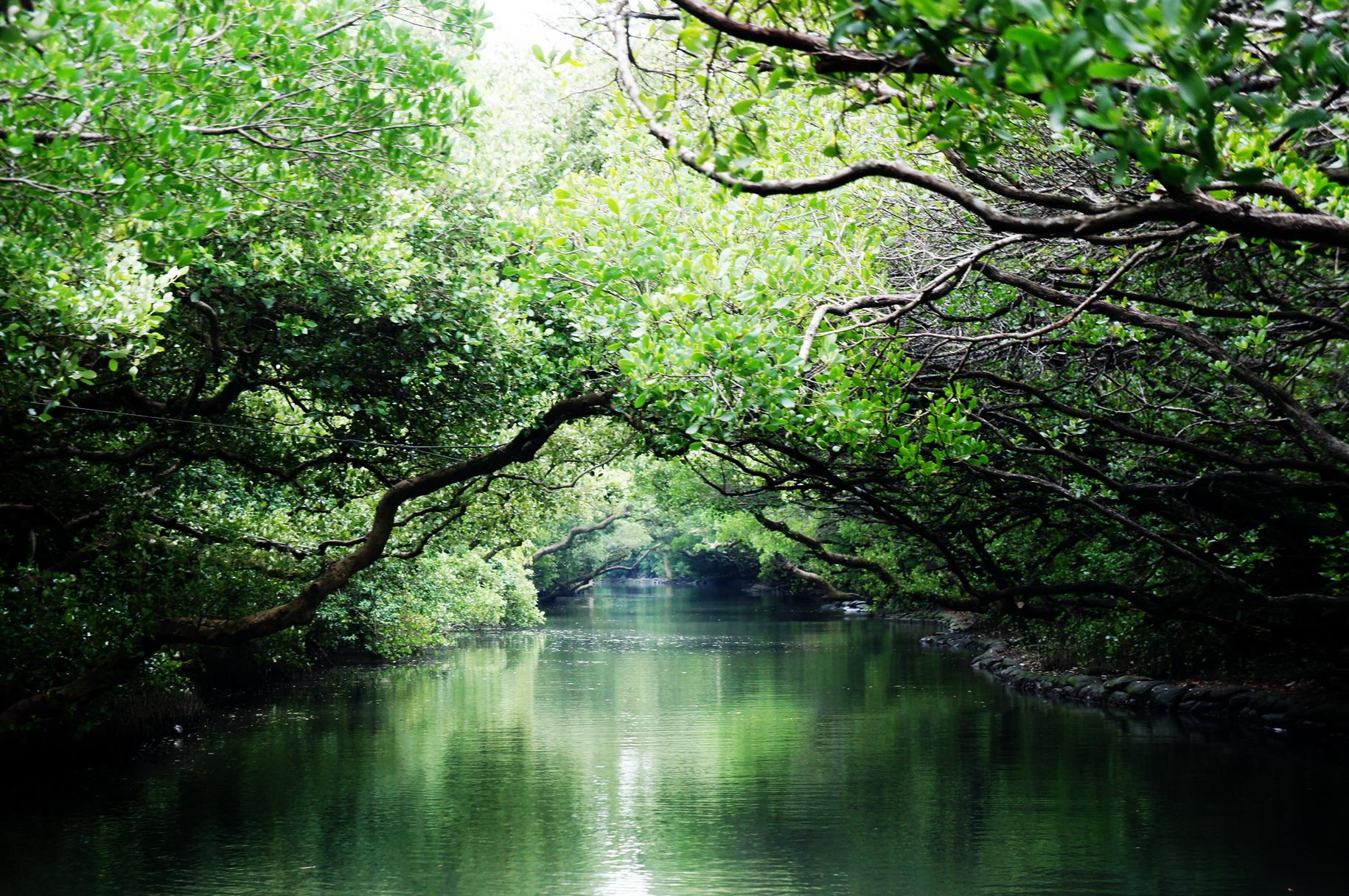 亚马逊河2