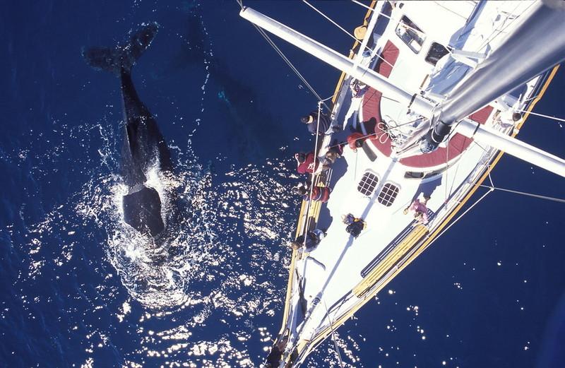 黄金海岸观鲸2