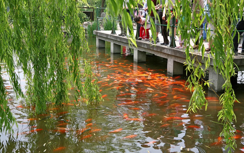 花港观鱼公园