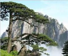 黄山仙境、魅力西递、木坑竹海双卧五天游