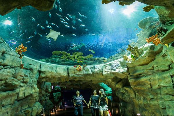 【大屿山精选系列04】香港大屿山+海洋公园+澳门三日游