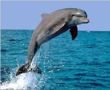【海豚巡游】新西兰南北岛8天岛屿湾炫动之旅(感恩惠享)