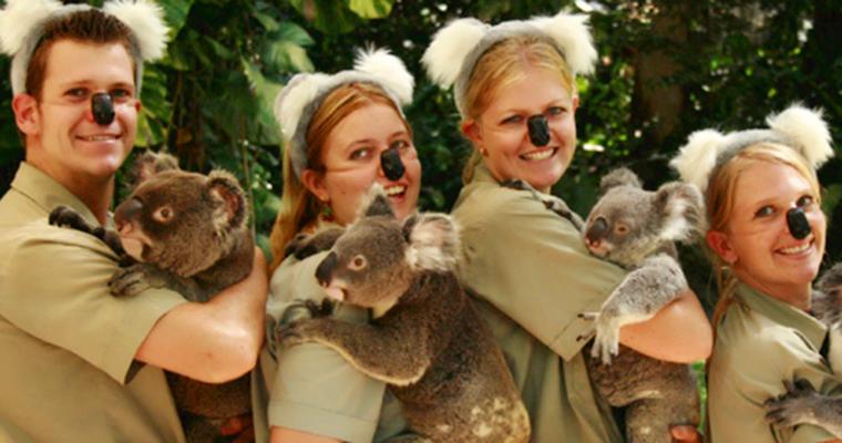 悉尼考拉动物园