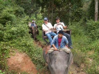 泰国骑大象