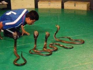 毒蛇研究所