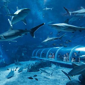 S.E.A海洋馆