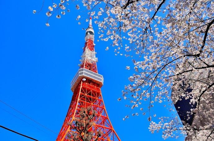 【东京の物语】日本东京•富士山五天精华游(深度体验)