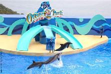 【超值品质】香港海洋公园+迪士尼乐园三日游(南京往返)